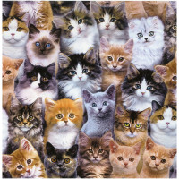 Adorable Pets - Cats - Product Image
