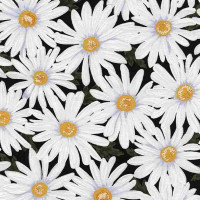 LovePacked Daisies - Product Image