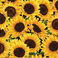 FleurPacked Sunflowers - Product Image
