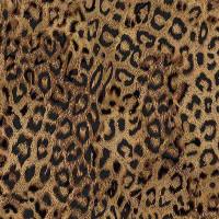 WildLeopard - Product Image