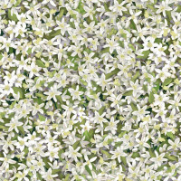 Orchard BlissOrange Blossoms - Product Image