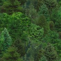 Landscape Medley - Trees - Product Image