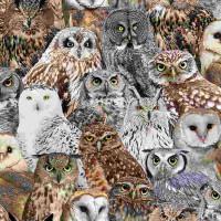 BirdPacked Owls - Product Image